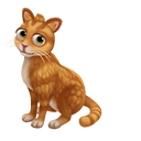 Adopt an American Shorthair Kitten!