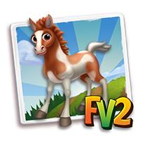 e_animal_baby_horse_marwari_piebald