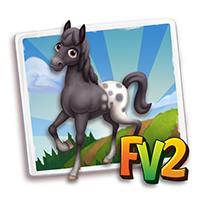 e_animal_adult_horse_rangercoloradoblack
