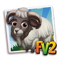 e_animal_adult_sheep_boreray