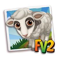e_animal_baby_sheep_faroe