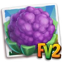 e_crop_cauliflower_royal
