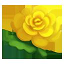 e_rare_crop_marigold_yellow