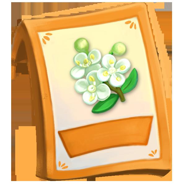 lic_packet_elderflower