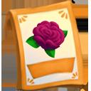 lic_packet_english_rose