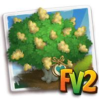 e_tree_heirloom_flower_acacia_daga