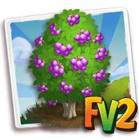 e_tree_fruit_berry_velvety