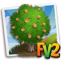 e_tree_wood_buloke_australian