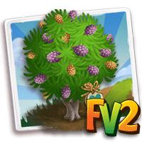 e_tree_heirloom_wood_buloke_australian