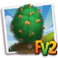e_tree_casuarina_barked_scaly