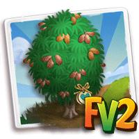 e_tree_heirloom_casuarina_barked_scaly
