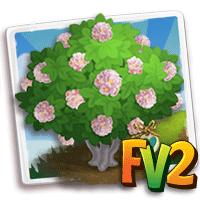 e_tree_heirloom_flower_dombeya