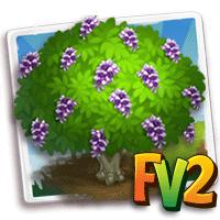 e_tree_flower_formosa_wisteria