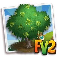 e_tree_heirloom_wood_ironwood_malabar