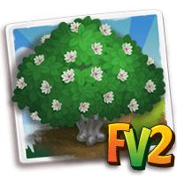 e_tree_tree_magnolia_oyama