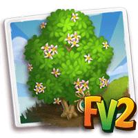 e_tree_heirloom_wood_mampat