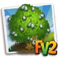 e_tree_heirloom_fruit_pear_garlic