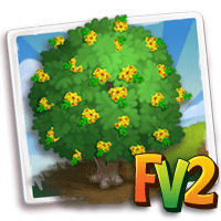 e_tree_flower_pernambuco