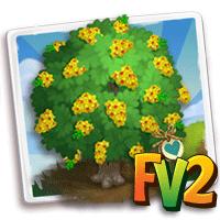 e_tree_heirloom_flower_pernambuco