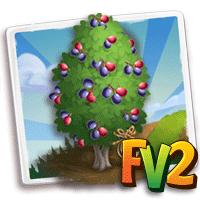 e_tree_heirloom_fruit_plum_rainforest