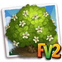 e_tree_flower_rosemallow_kauai_white