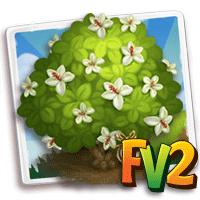 e_tree_heirloom_flower_rosemallow_kauai_white