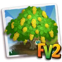 e_tree_heirloom_flower_showergolden